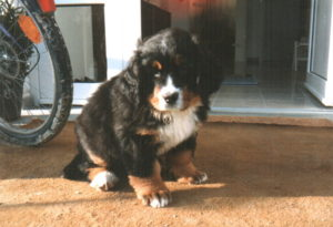 Ilka mit 9 Wochen im Januar 1994